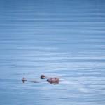 Mi a hatékony úszás titka? Tudja meg!