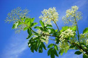 Tavaszi méregtelenítés gyógynövényekkel